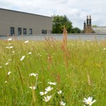 Green roofs – growing opportunities for the future