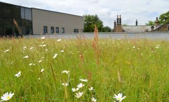 Optigreen - extensive green roof