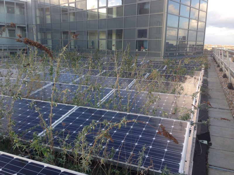 London green roof - green roofs and solar power poorly designed