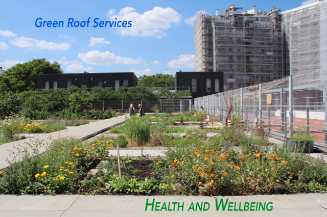 green roof service - health and wellbeing