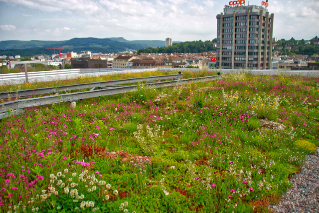 Biodiverse green roof - extensive