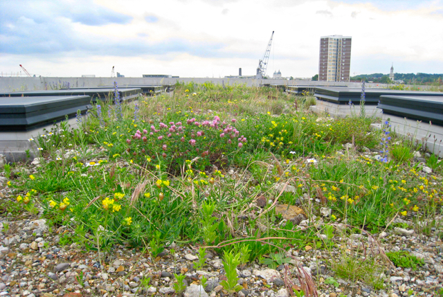 Brown Roofs For Biodiversity