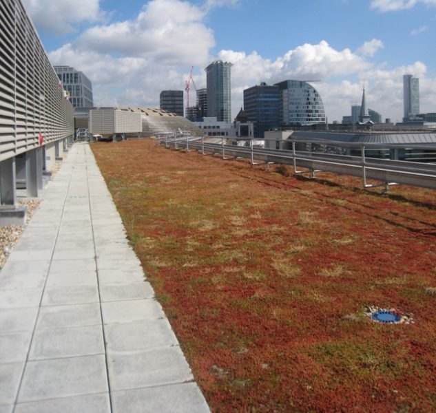 Extensive Green Roofs With A Thin Growing Medium