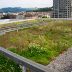 Swiss green roof for biodiversity