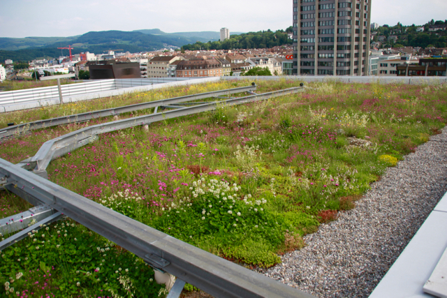 Swiss Green Roof For Biodiversity - 1