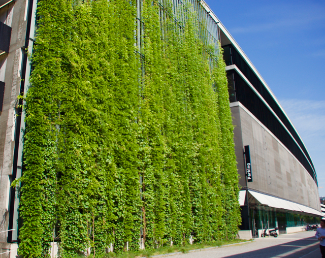 A cable supported green wall facade in Switzerland