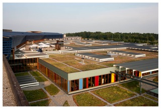 Deventer Hospital, 7000m2 sedums, 2008