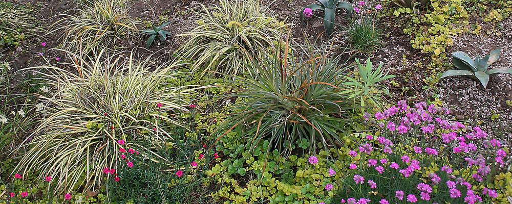 reasons to build a green roof