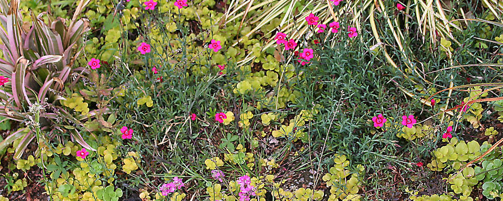 architect Jon Broome