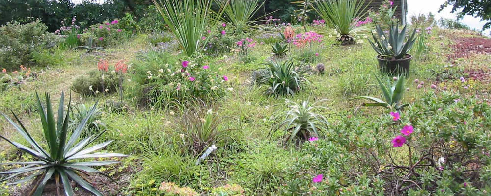 David Matzdorf's green roof garden
