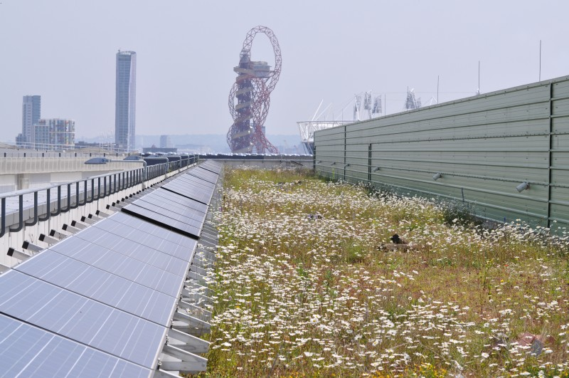London Olympic's Solar Green Roof designed for biodiversity - S.Connop