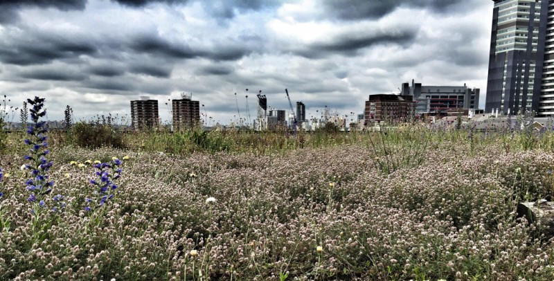 Skyline over a green roof in London