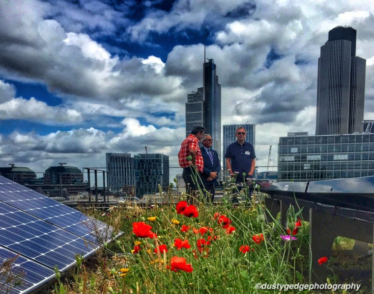 Biosolar roof - poppies