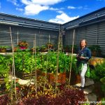 Food growing is possible on green roofs in London