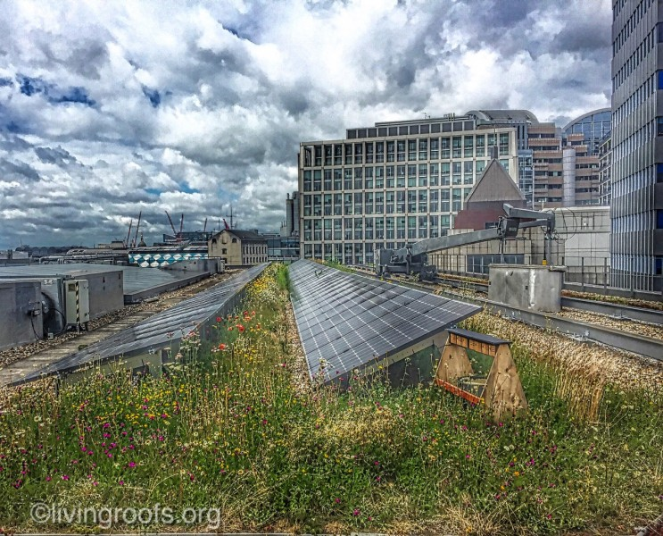 Singing sustainability - London green roof