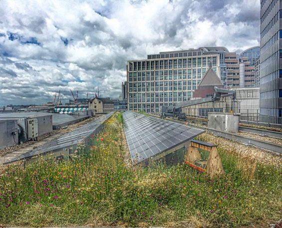 Retrofitting green infrastructure, bees, pollinators and solar panels
