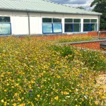 Schools – learning through green roofs