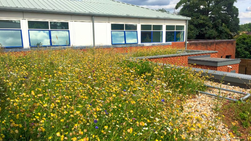 Schools - green roofs for education