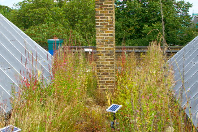 London - wetland green roof
