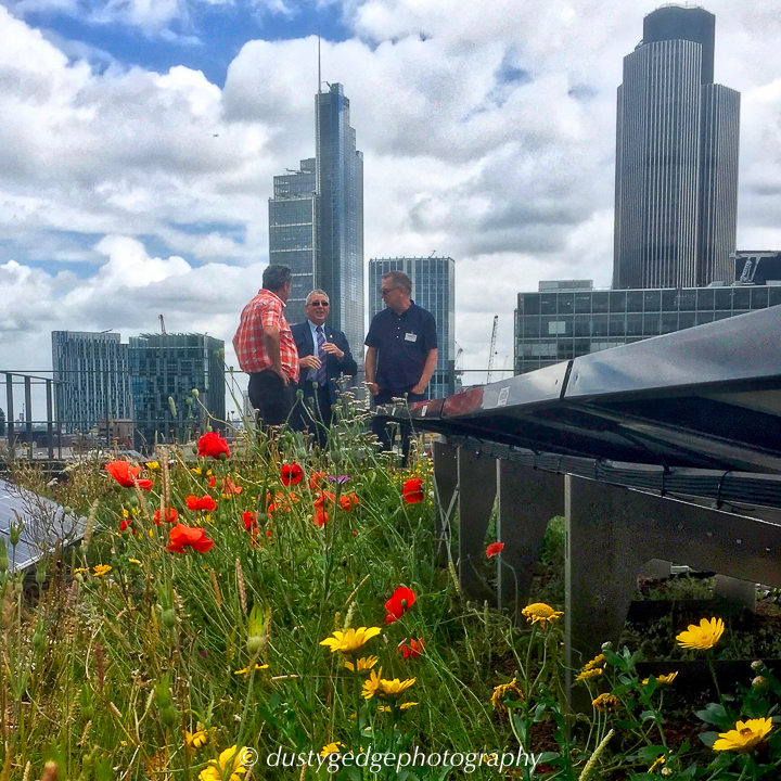 Nature And Biosolar Roofs Working Together For London
