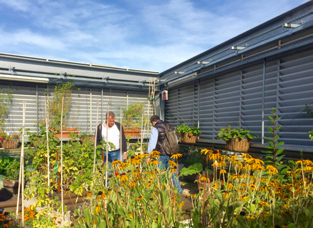 Farming on green roofs London
