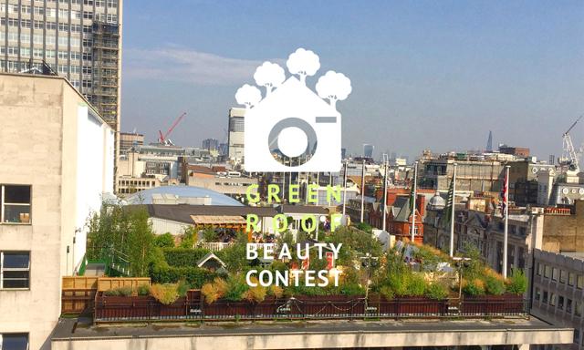 Rooftop garden - intensive green roof London