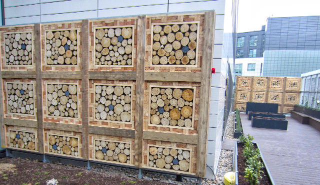 solitary bees - habitat walls green roofs