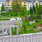 A garden roof in Linz – one of the leading green roof cities