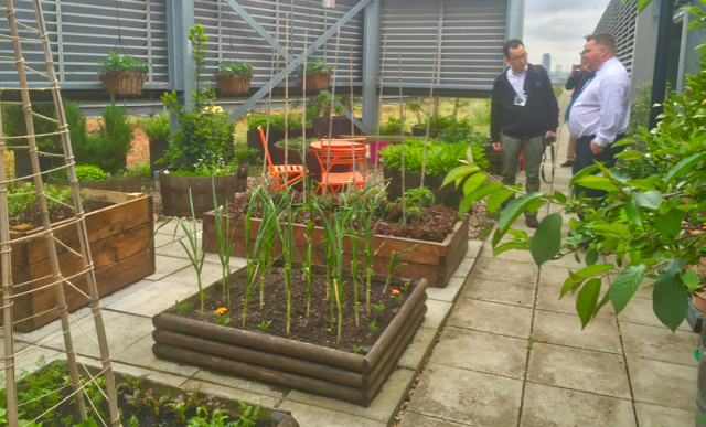 Eversheds Ltd London - staff food growing area.