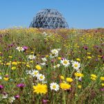 Vote on your favourite green roof photos – from around Europe