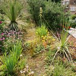 A Mediterranean Hillside in Islington London – update