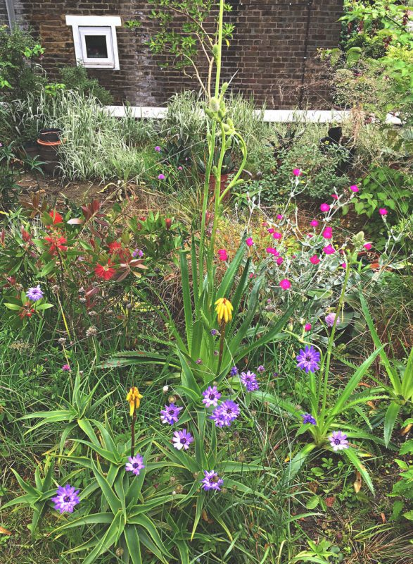 Colour and exotica on a green roof in London