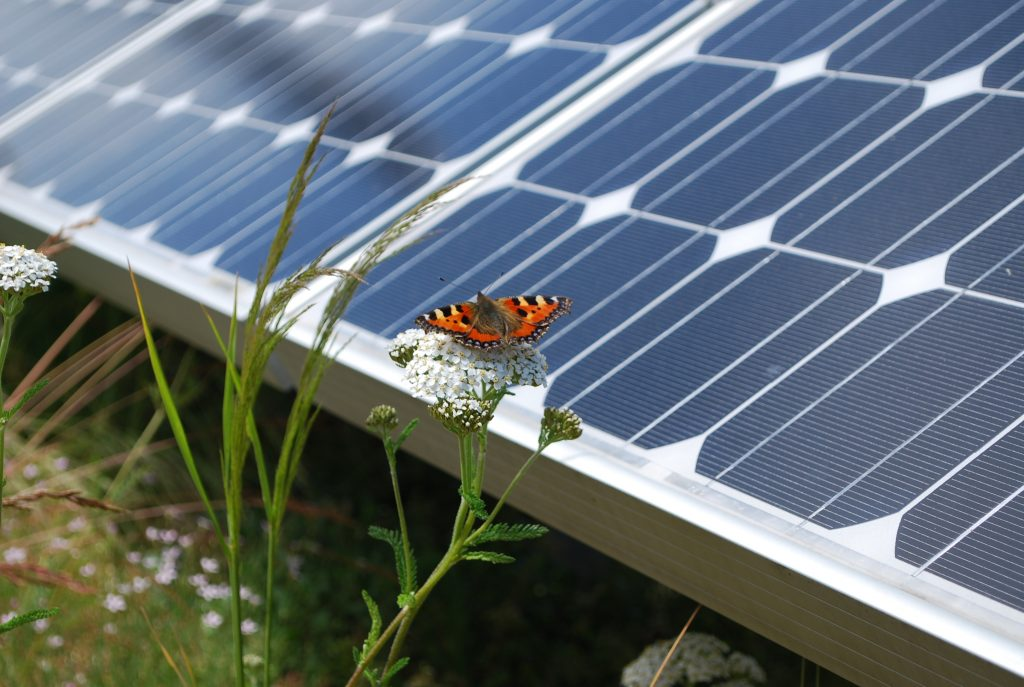 French - could increase biodiversity and solar power generation