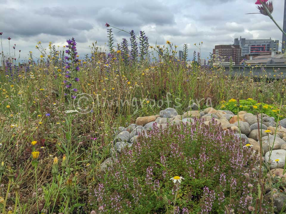 Green Roofs Designed For Biodiversity