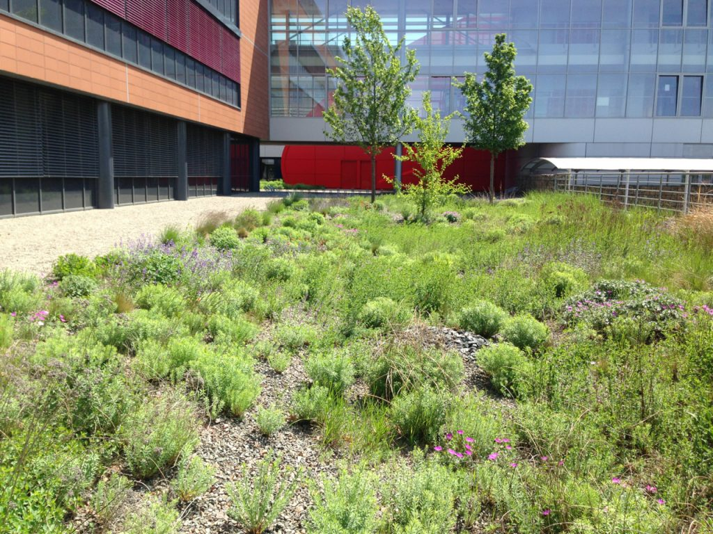 Czech green roof - semi-intensive