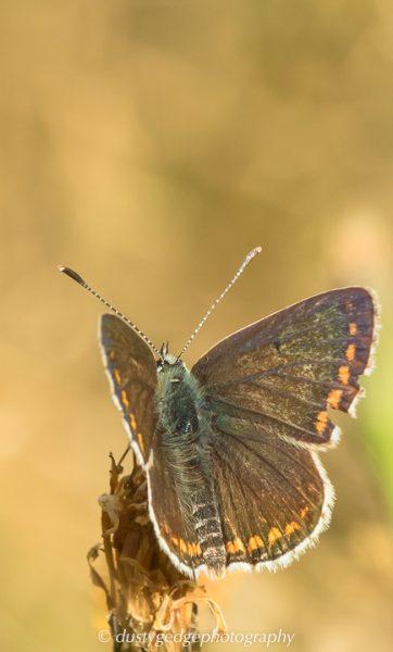 Scotland - green roofs and butterflies