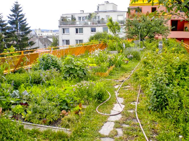 green infrastructure - urban food Vienna