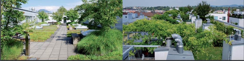 Salzburg - Österreich - Austria - green roofs