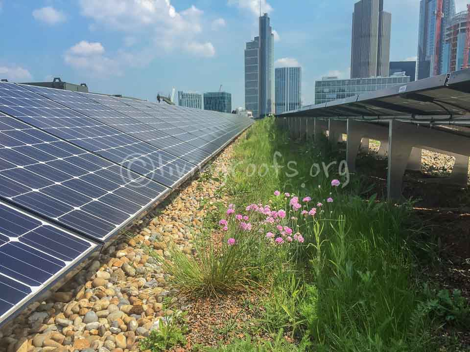 Biosolar Roof Gallery Green Roofs And Solar Power