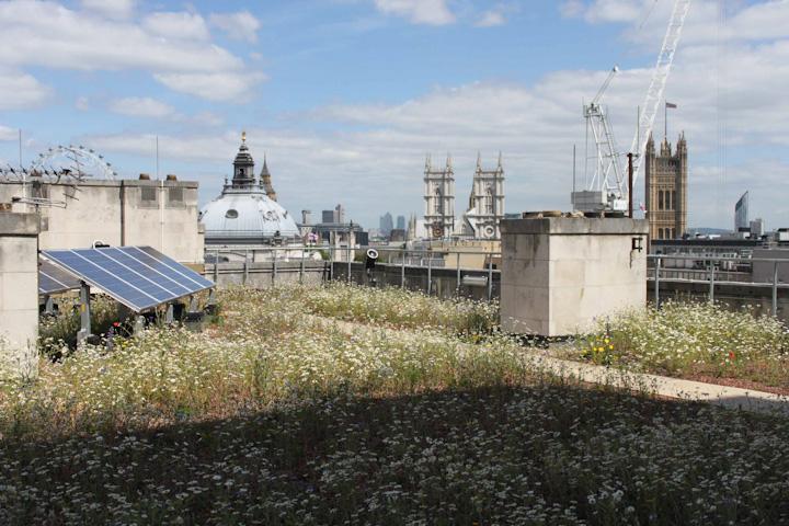 TFL roof IMG_1657.jpg