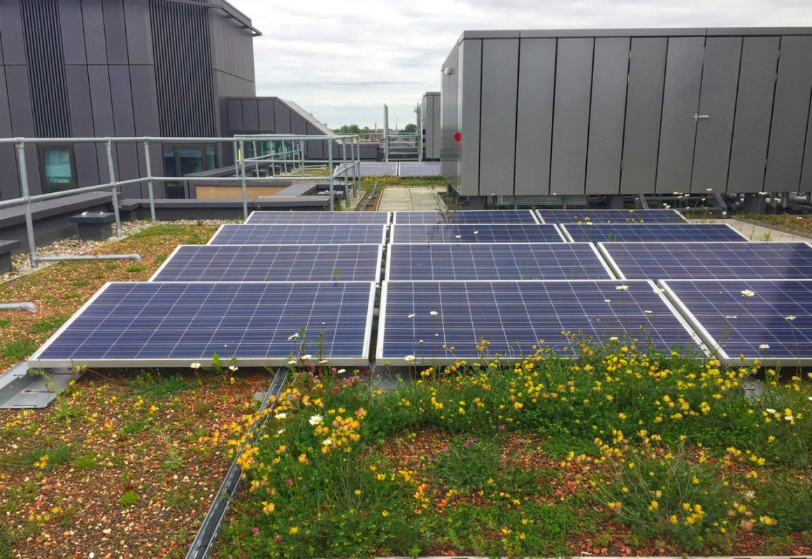 A Green Roof Solar Boost And A Boost For Nature Too
