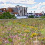 Green performance or green in colour – the second green roof poll