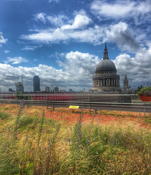 green roof for biodiversity - London