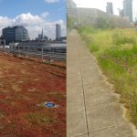 Green roof poll 1 – do the public think nature or engineering