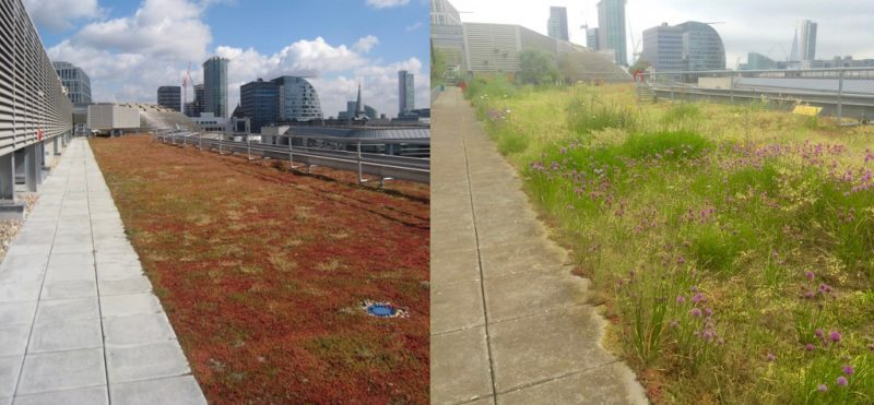 green roof poll - green roofs