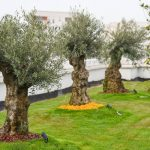 Tirana too is walking the green roof talk – Europe's green cities