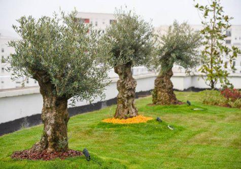 Tirana too is walking the green roof talk – Europe's green cities