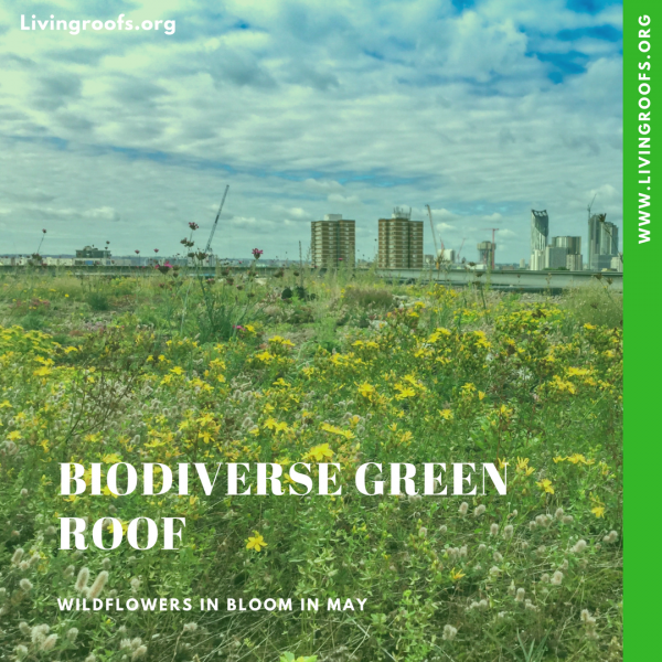 Biodiversity and green roofs - green roof service in action