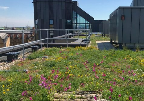 David Attenborough Building and  Cambridge green roof policy