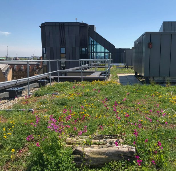 Cambridge green roof policy - green roof beacon